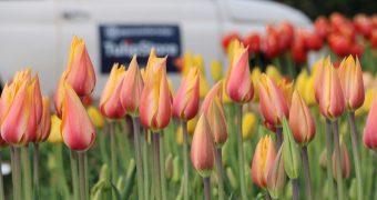 Showtuin van TulipStore.eu